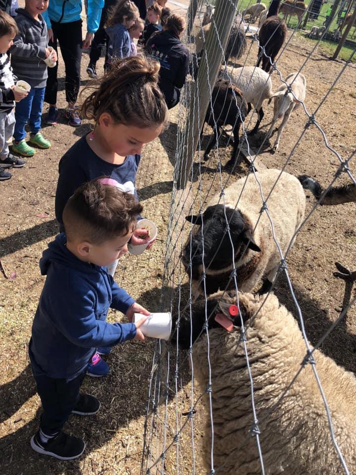 chesterfield-farm-2018